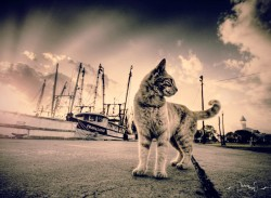 cat with boat