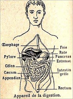 vintage digestion
